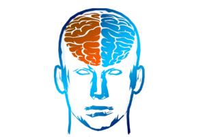 SE CONNECTER A SA PETITE VOIX INTÉRIEURE : dessin des 2 hémisphères cérébraux.